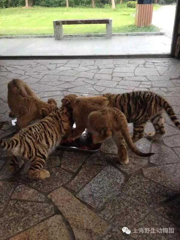 组合,在我园小动物乐园内成为了相亲相爱的一家子,快乐地生活在一起.