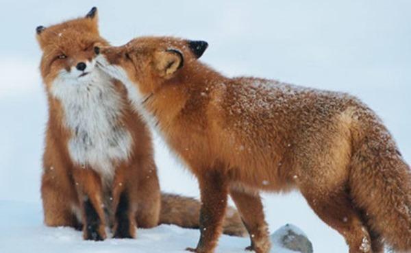 动物之间的爱情,亲情!极具治愈效果!