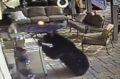 黑熊驾轻就熟地打开了冰箱门,从中拿出来几罐冰镇饮料。(视频截图)