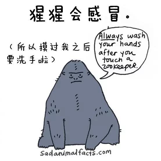 专门有呆萌的漫画介绍那些动物的冷知识,比如:你知道鲨鱼一次怀孕需要