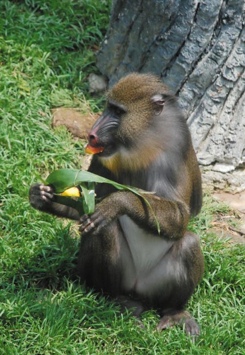 森林动物园的动物们也吃上了适合自己口味的