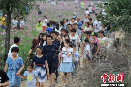 端午小长假陕西关中近郊游火热,图为大量游客畅游在花丛中。张远 摄
