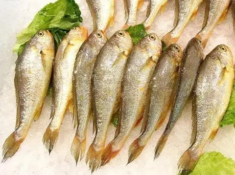 科学养殖海鲜_吃货必备冬季巧食海鲜远离这些不宜事项