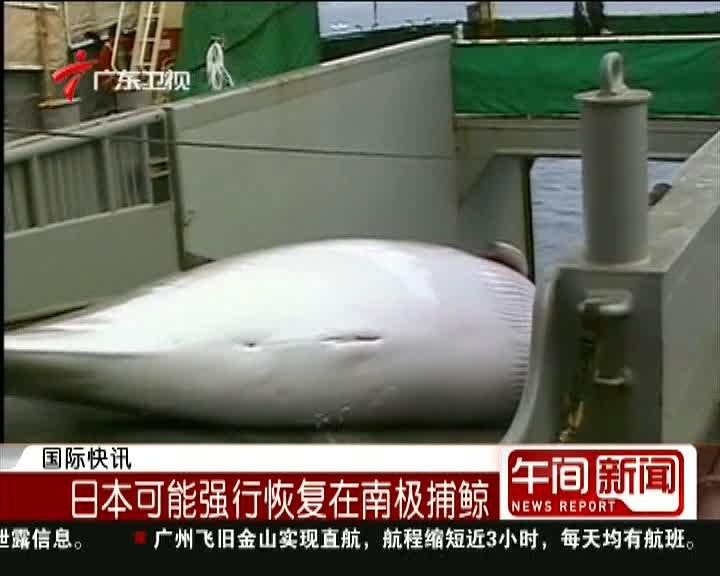 日本可能强行恢复在南极捕鲸