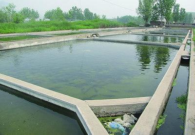 养殖鱼塘设计图