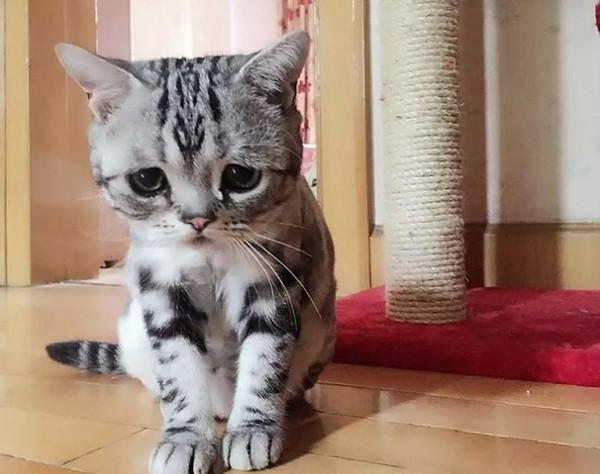 最萌最胖最可爱猫图片