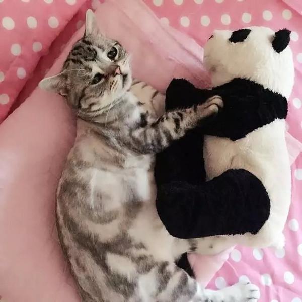 抱着玩具的Luhu看上去还是那么委屈。