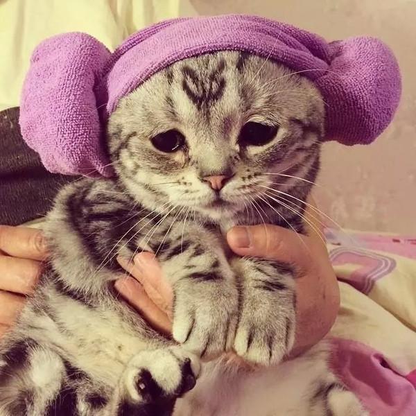 """""""为什么主人要给我戴这个帽子,好丑哦。"""""""