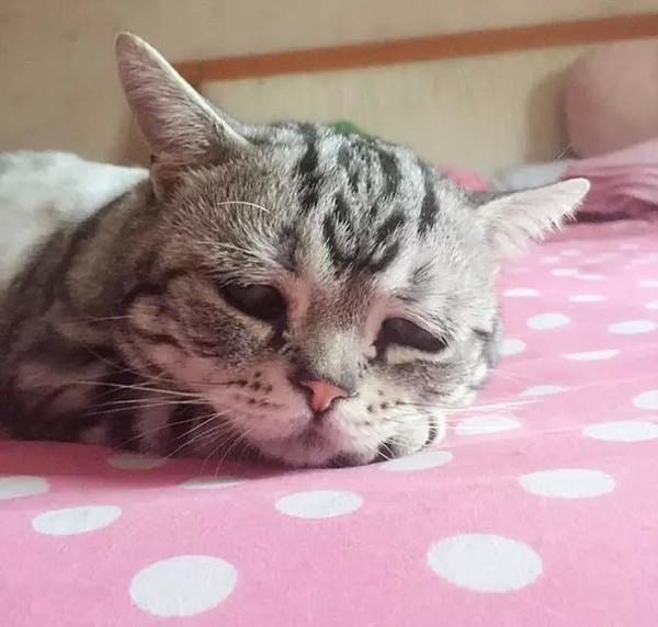 """这只小猫也瞬间触发了无数女性网友的母性:""""噢天哪,这小家伙太可怜了,我要给它好多爱的抱抱。"""""""