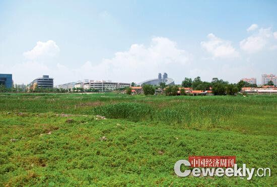 文安村的农田早在几年前已被征收,因一直未开发而荒废。《中国经济周刊》