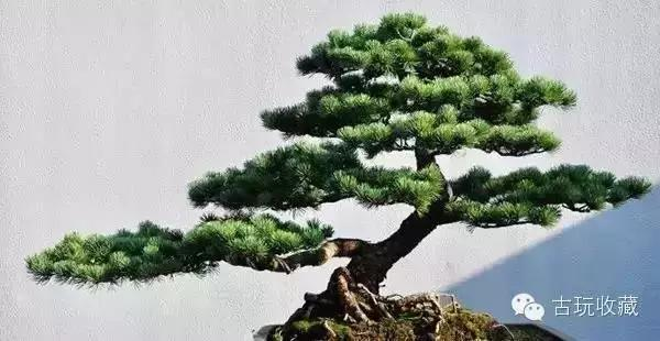成都仿真植物造型