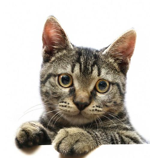 这种动态的平衡遭到破坏(失衡),猫咪的营养状况,生理功能,抵抗疾病的
