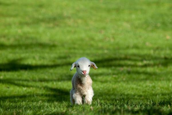 分享一组超萌可爱的动物宝宝