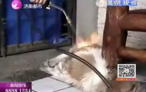 女子持喷火枪烤狗视频曝光后,引起网友的极大愤慨,认为该女子残忍至极。
