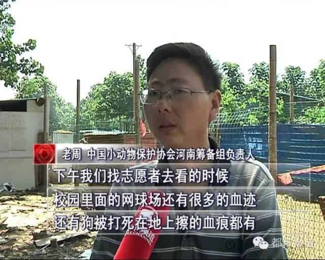 网曝郑州高校打死20多只流浪狗 视频残忍 校方这样回应