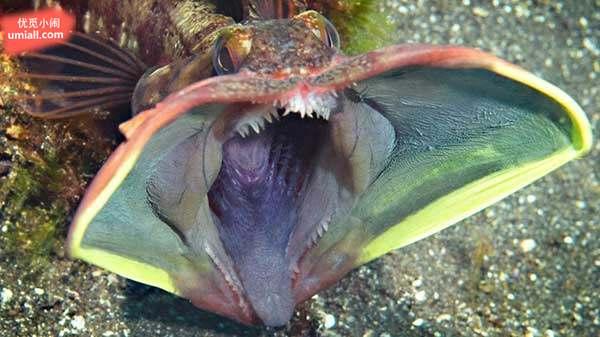 26种最诡异的海底生物,就像科幻片里的怪物