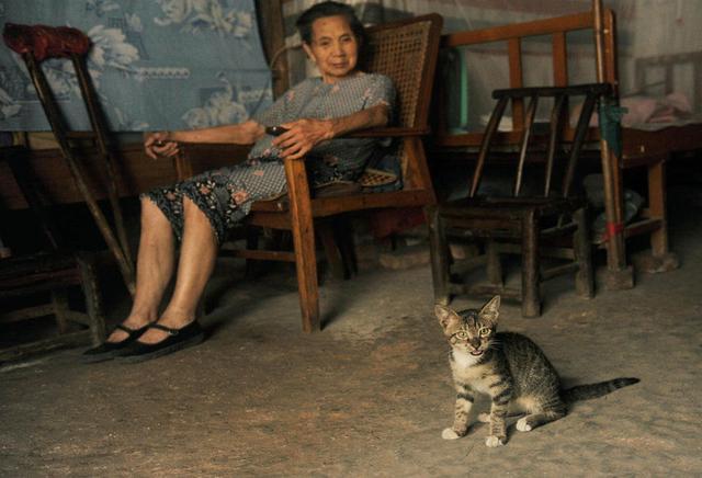 一位孤独老太和她的猫为伴