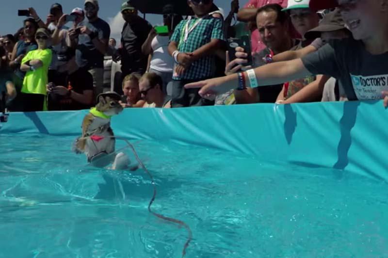 小松鼠现身风头极限运动大赛滑水神技抢尽世界(足球)贺龙组图图片