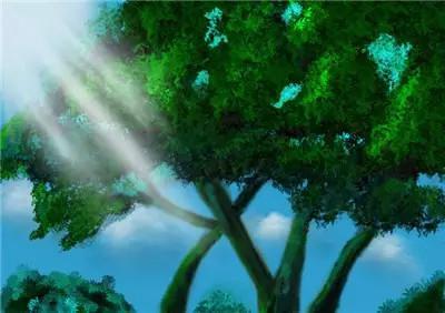 一棵树上的枝叶生长是有方向的