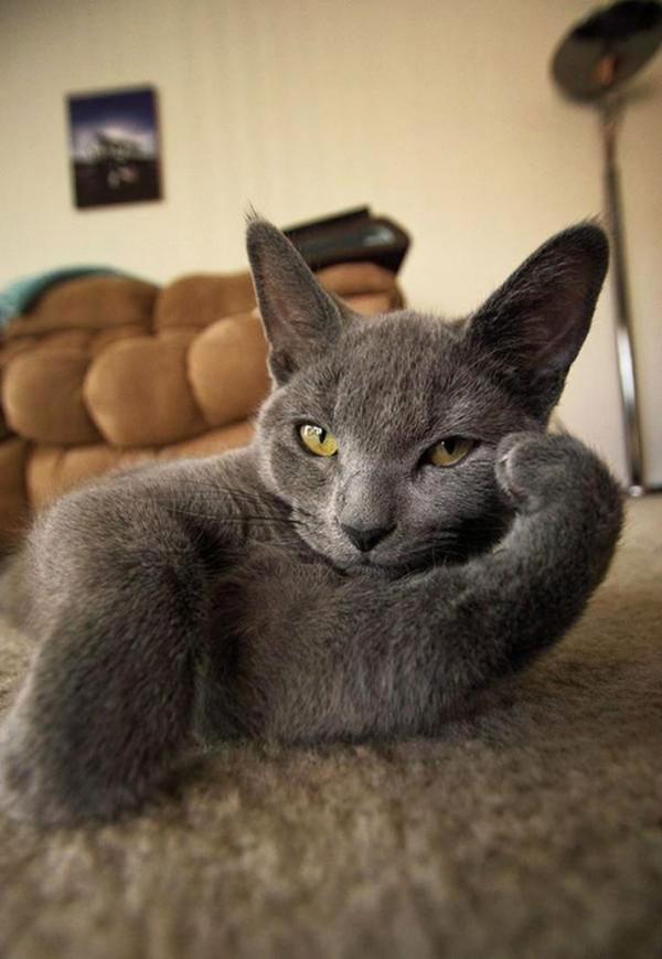 用正确的宠物来捧红自家姿势图风搞微笑神若表情包恶图片