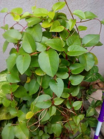 壁纸 花 盆景 盆栽 植物 桌面 400_533 竖版 竖屏 手机图片