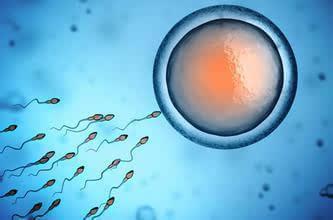 你知道需要多少精子才能怀上孩子吗?