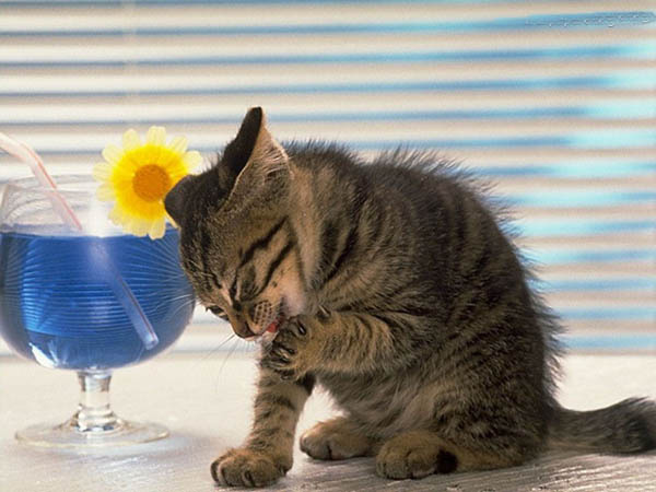 猫咪拉肚子怎么调理图片