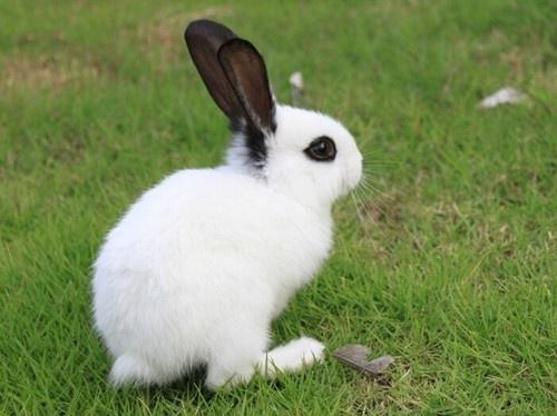 兔子拉肚子怎么办