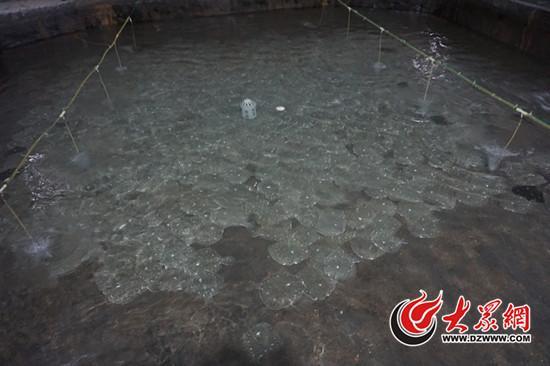在日照某养殖场,警方将10余吨浸泡过非法药物的多宝鱼扣押封存(警方供图)