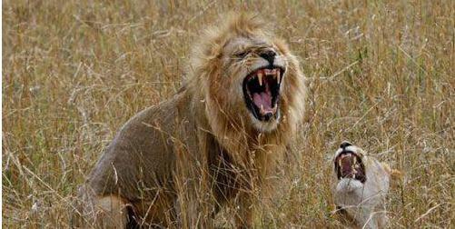 盘点全球十大最恐怖的杀人动物!第一名竟是它