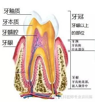 这些问题有助于判断是牙齿解剖结构的问题还是精神因素导致磨牙.