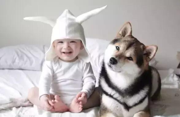 当别的国家在教育孩子:我们要爱护小动物