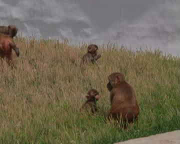 那些在动物园的小动物们