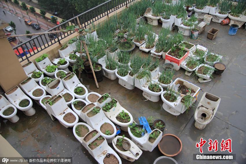 的小菜园种菜图片,朋友家的天台菜园, 房顶 种菜图片