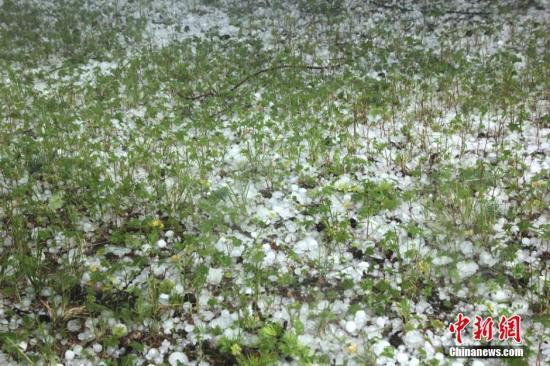 7月13日14时10分,甘肃天祝县部分乡镇遭受强降雨并伴有冰雹,此次降雨过程主要集中在华藏寺、打柴沟、石门、抓喜秀龙等乡镇。文占军 摄