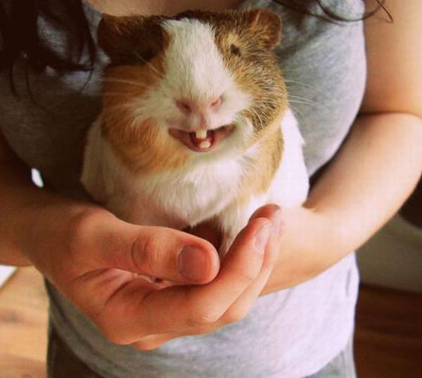 让人忍俊不禁的超萌动物表情