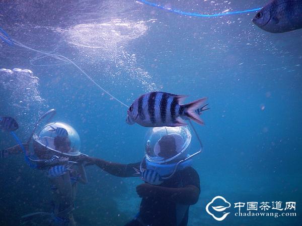 与海底动物零距离接触?体验海底漫步