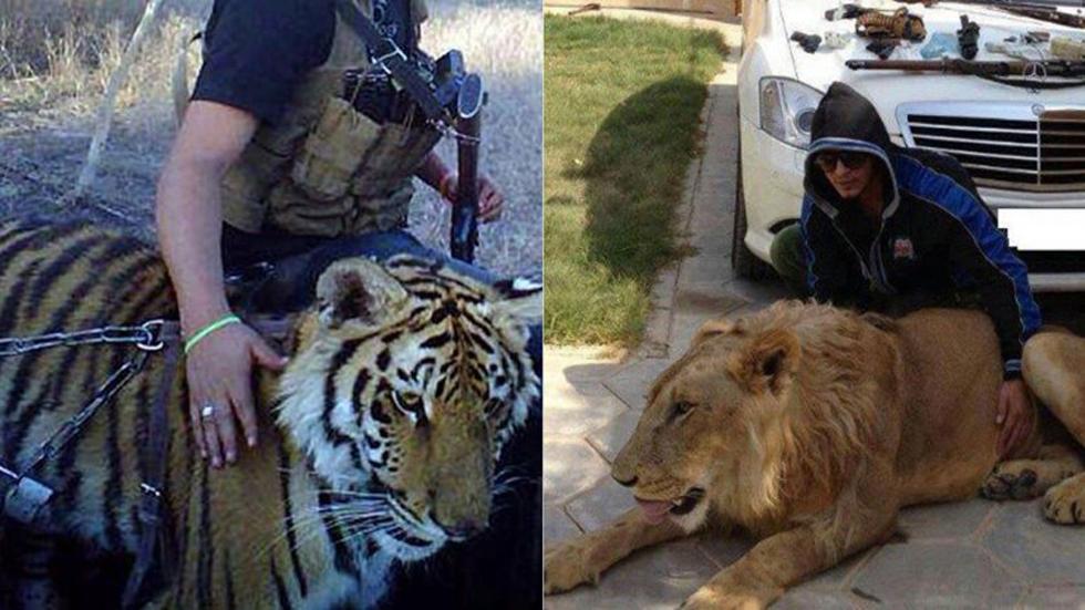 墨西哥毒枭古斯曼家中山君和狮子(网页截图)