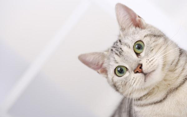 壁纸 动物 猫 猫咪 小猫 桌面 784 441
