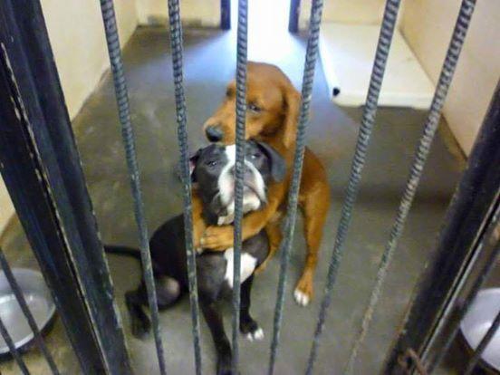 两只小狗因为「一个拥抱」而救了彼此一命!图片
