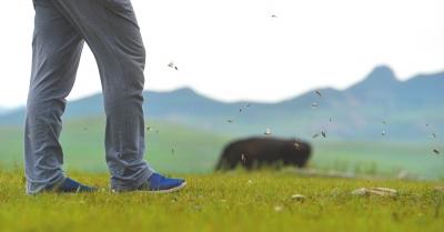 有人走过,成群的蝗虫在牧草间跳起。
