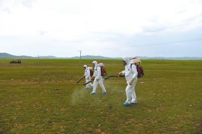 工人在草原上喷洒灭蝗药剂。