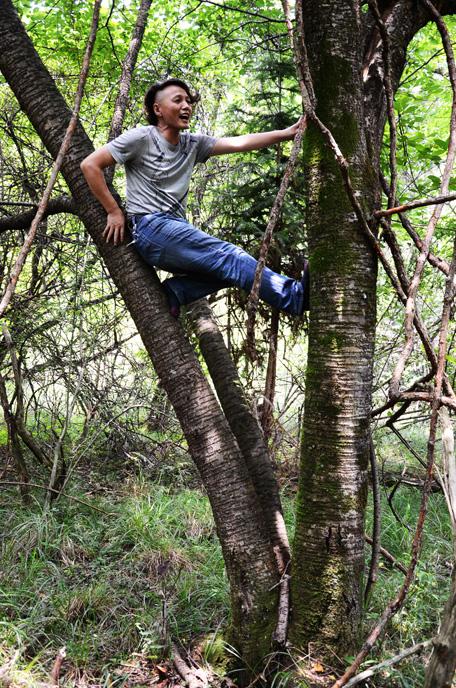 三峡芝兰谷樱桃树王图片