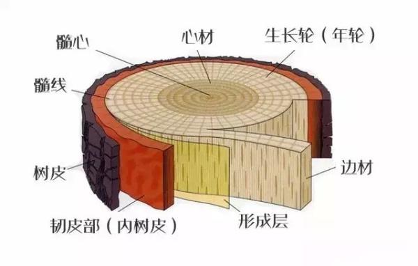 大树的基本结构