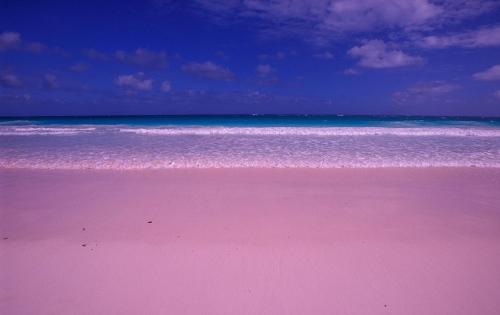 """景致""""最性感""""粉红沙滩构成世界梦幻女人的照片性感飞机看打时图片"""