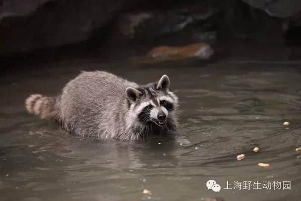 """动物戏水节——还记得水禽湖畔的""""干脆面""""吗?"""