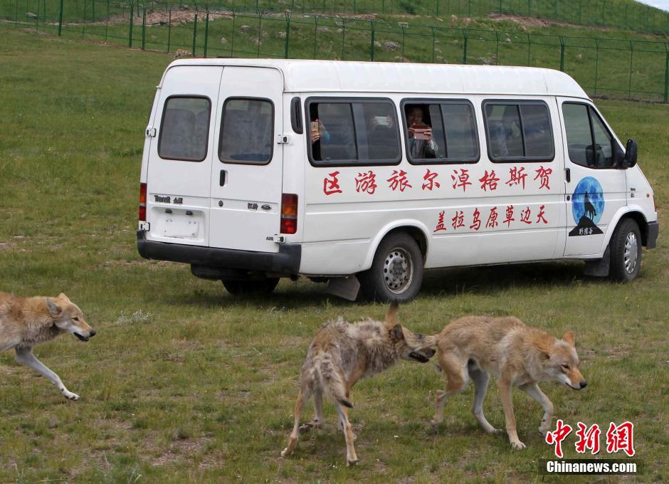 锡林郭勒盟东北部的乌拉盖大草原是中国最美的草原 ...