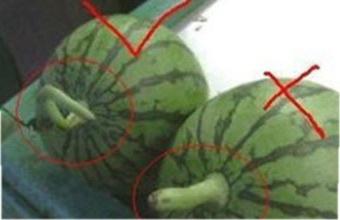 怎样才能真正挑选到好的西瓜?
