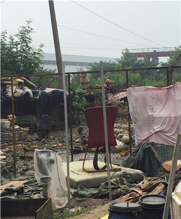 收集图像显现,兄妹俩在养狗场与狗中国股市 。 @江苏电视台 图