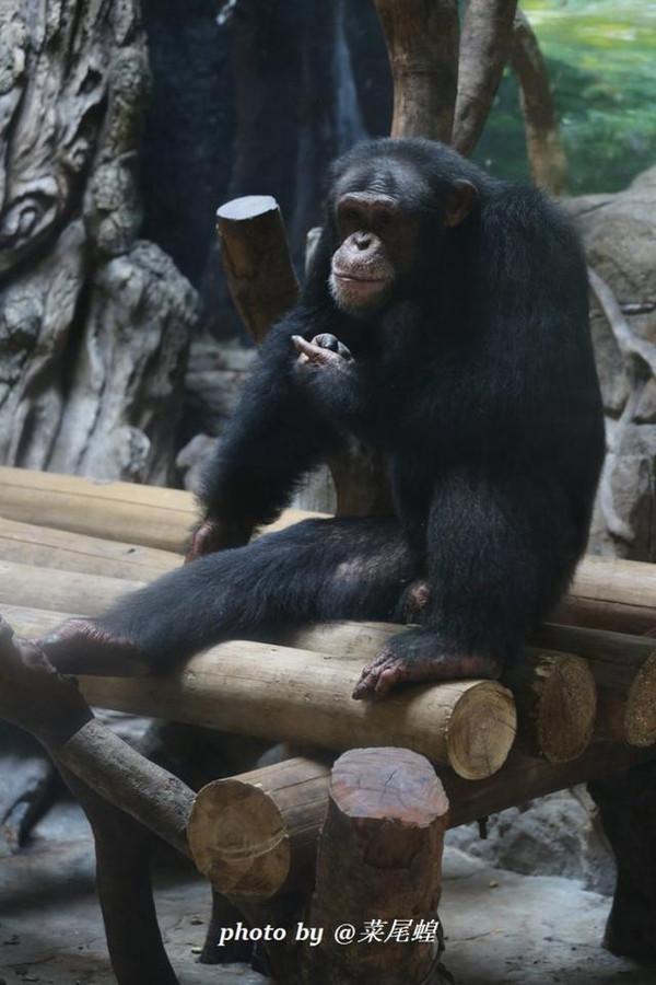 长隆野生动物世界,这样的20种玩法你试过几样?